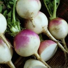 Shalgam (Turnip) - 1.5lb
