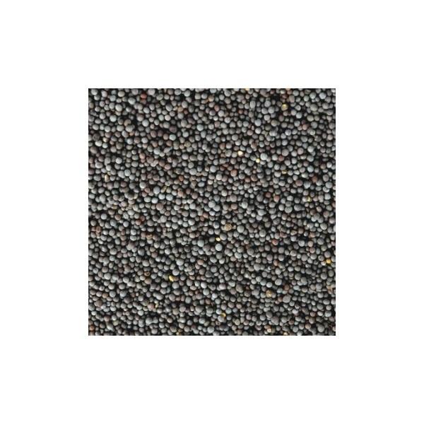 Mustard Seed Black (Raai)