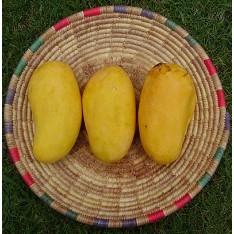 Pakistani Honey Mango, 3KG