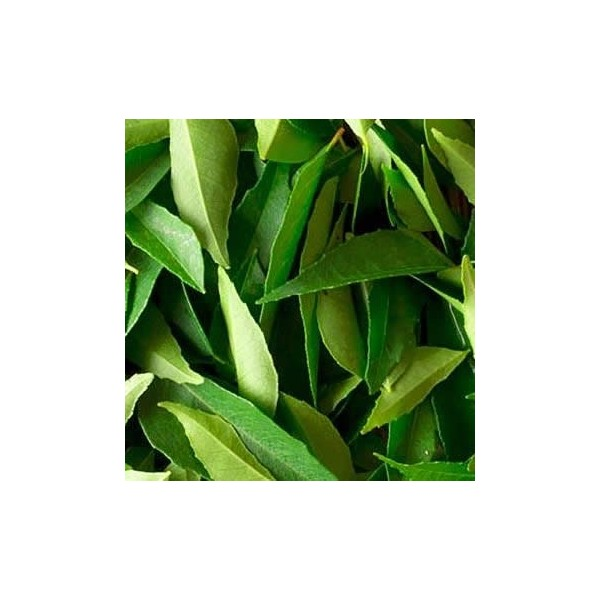 Curry Leaves (Curry Patta)