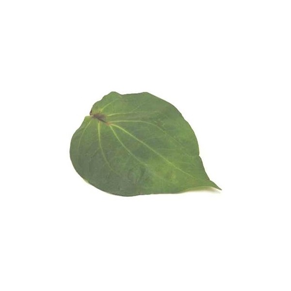 Paan Patta (Beatle Leaf) 1 Piece